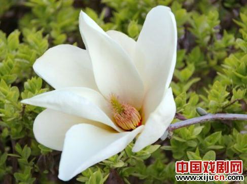 《上海之春》与著名京剧鲁迅学派艺术家张秋月